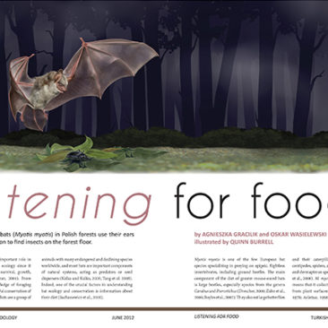 Article layout design. <i>Adobe InDesign and Photoshop